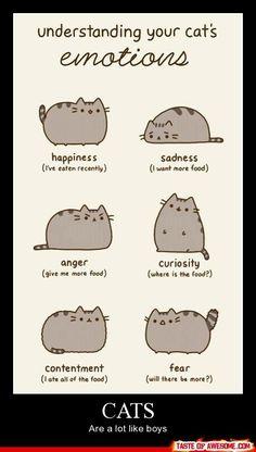 Cute kitties >^..^<  (sadness looks like Copper before I leave, haha)