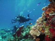 Paradise Reef, Cozumel Mexico