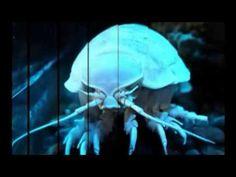 おいしい 人気 深海 珍味 オオグソクムシ