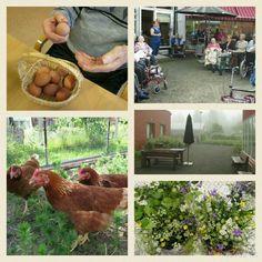 Meillä tämäkin kesä hoivataan kanoja ja vietetään aikaa yhdessä! @ http://hoivakotionnela2.blogspot.fi/ #hyvaelama