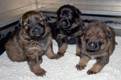Kids! 2017 RCMP Name the Puppy contest starts today | Royal ...