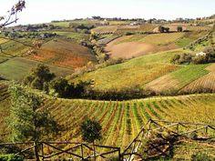 Countryside near Monte San Giusto, the little town where I live