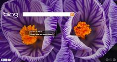 Bing's theme celebrating the first day of spring.