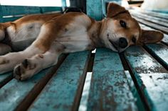 Blog | Hundehaftpflicht Versicherung | Vergleich und Test | 2017 ✓