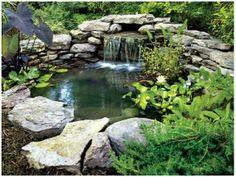Chips, ferns, plants, river rock