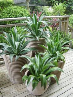 Sandhal Outdoor Planters, Indoor Outdoor, Potted Plants, Indoor Plants, Exterior Design, Interior And Exterior, Outdoor Entertaining, Botany, Backyard Landscaping