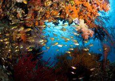Nature, water beautiful colors...