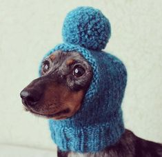 Jezebel gets ready for a snow storm. Dachshund Puppies, Weenie Dogs, Dachshund Love, Cute Puppies, Cute Dogs, Dogs And Puppies, Daschund, Dapple Dachshund, Poodle Puppies