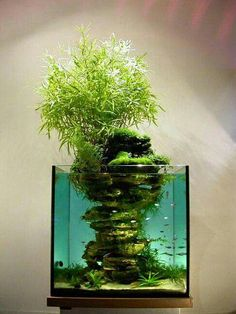 ancient Japanese art of Bonsai creates a miniature version of a fully grown tree through careful potting, pruning and training. Even if you're not zen enough to labour over your own Bonsai,. Planted Aquarium, Aquarium Fish, Aquarium Aquascape, Aquarium House, Aquarium Garden, Reef Aquascaping, Live Aquarium, Fish Aquariums, Aquarium Design