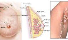 ¿Sabes cómo prevenir el cáncer de mama por la desintoxicación de las axilas