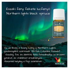 Northern Lights fekete lucfenyő- Párologtassa ezt a gazdag, fás, serkentő illatot meditáció közben, hogy friss, illatos légkört teremtsen. Bőrápolási termékekhez hozzáadva vagy helyileg alkalmazva javít a száraz bőr megjelenésén, vagy segít az egészséges bőr fenntartásában. Young Living Essential Oils, Northern Lights, Pure Products, Aromatherapy, Canada, Nordic Lights, Aurora Borealis, Aurora