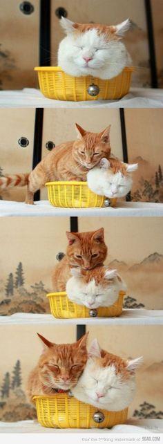 Kittiesss.