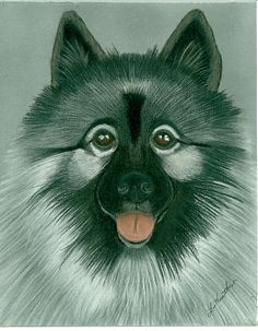 Keeshond Painting by Linda Henthorn