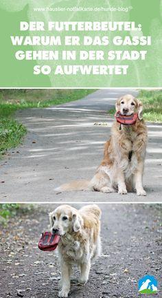 Der Futterbeutel: warum er das Gassi gehen in der Stadt so aufwertet! Jetzt im #Haustier #Notfallkarte #Hunde #Blog!
