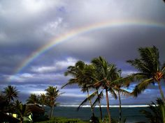 A beautiful photograph that captured beautiful scenery above Hawaiian palm trees!