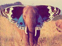Especial  Elephant