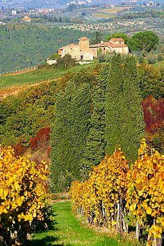 Viñedos, región de Chianti, Toscana, Italia