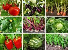 На каком расстоянии друг от друга высаживать овощи » Женский Мир