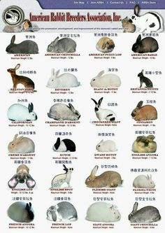 A reference if you are trying to figure out what type of bunny you have ...