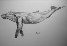 Humpback whale on Behance