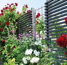 Mixed trellis-screen