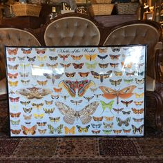 Moths of the world Print with frame