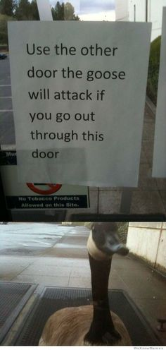 use-the-other-door-the-goose-will-attack-if-you-if-go-out-throught-this-one