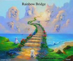 Pet bridge to Heaven