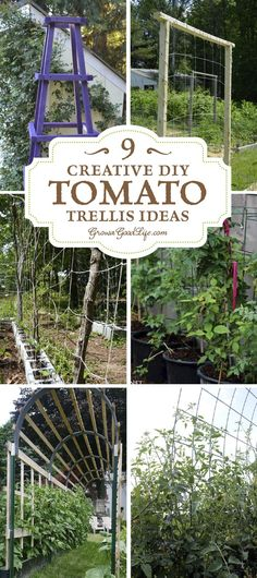 A tomato trellis is a freestanding structure usually made from wood or metal that is used to support the sprawling vines and heavy fruit of the tomato plant. Providing support for your tomato plants helps keep the plants healthy, so they can produce maximum yields. The type of trellis support you will need for your tomatoes depends on the variety you are growing. Read on for some creative DIY tomato trellis ideas.