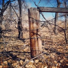 This reminds me of the old rusty Barbed Wire Fencing we had in the country on the farm growing up.