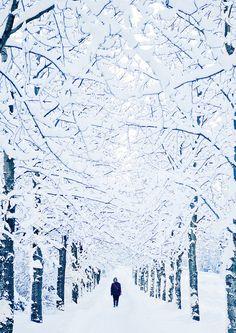 Reykjavik looks like a true winter wonderland Winter Szenen, I Love Winter, Winter Time, Winter Walk, Winter Wonderland, Photography Winter, Snow Scenes, Winter Beauty, Belle Photo