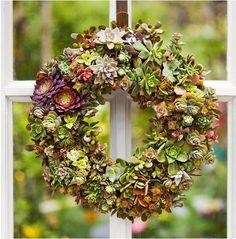 Better Home Gardens: Succulents Wreath DIY