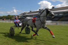 harness racing | harness racing s elite will be out in force at musselburgh racecourse ...