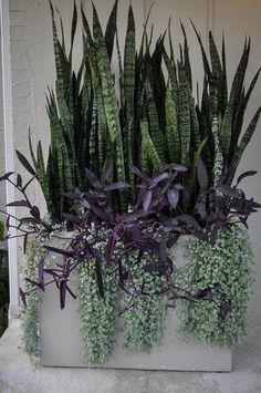 espada de sao jorge com outras plantas