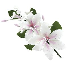 Double Rubrum Lily Spray, White with Pink, 1 Count by Chef Alan Tetreault Floral Sprays