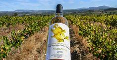 Domaine des Mathouans, des vins en Roussillon