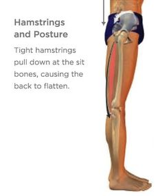 Healing (or Preventing) Hamstring Injuries Hamstring Pull, Hamstring Muscles, Lower Back Pain Exercises, Stretching Exercises, Stretches, Tight Hamstrings, Glutes, Yoga International, Improve Flexibility