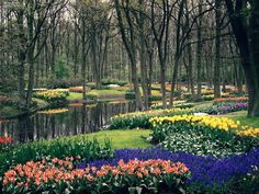 One of the most beautiful gardens I've ever seen.  I would love to go back a stroll through it again.  It has to be April though!