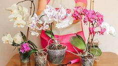 Hnojivo na orchideje z bramborových slupek zajistí bohatou… | iReceptář.cz Glass Vase, Flora, Table Decorations, Plants, Compost, Plant, Dinner Table Decorations, Planets