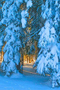 66 Ideas Photography Winter Forest Snow Scenes For 2019 Winter Forest, Winter Szenen, I Love Winter, Winter Magic, Snow Forest, Winter Trees, Blue Forest, Winter Night, Magic Snow