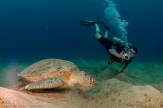 Underwater photography  - don't miss out on very special holiday pics. Loads of cheap and effective solutions out there now