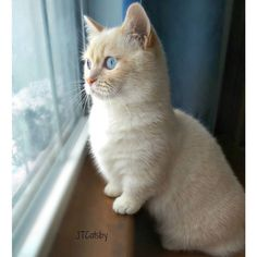 Woke up to snow! That means instead of #SundayFunday... Follow us on Instagram :D #cats #cat #catlover #lovecats #funny #fun #cute #socute #feline #felines #felinefriend #fur #furry #paw #paws #kitten #kitty #kittens #kittycat #kittylove #fluffy #fluff