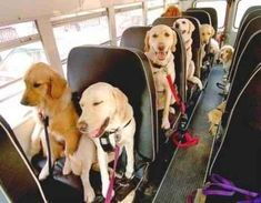 We're going to the park! We're going to the park!