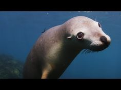 One World Once Ocean underwater cinematographer Howard Hall caught this while diving in Australia last summer.