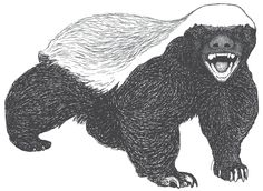 honey badger drawing - Google Search