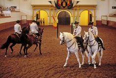 Real Escuela Andaluz de Ecuestre.  Magical stallions and superior riders.
