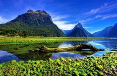 今年の夏はニュージーへ行こう!ニュージーランドで見れる絶景8選   RETRIP ミラー湖