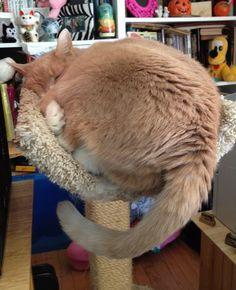 Nicky-taking a nap.