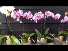 Inside Plants, Life Is Good, Home And Garden, Gardening, Flowers, Balconies, Decoration, Youtube, House
