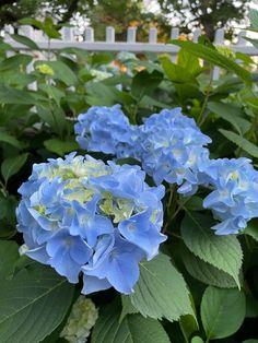 English Flower Garden, Hydrangea Garden, Flowers, Plants, Plant, Royal Icing Flowers, Flower, Florals, Floral